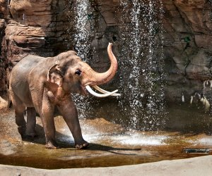 Meet the elephants at the LA Zoo. Photo by Jamie Pham