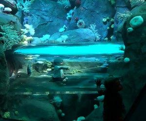 New York Aquarium's Sharks! exhibit