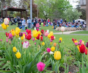 Celebrate spring with more than 20,000 blooming tulips in Heckscher Park. Photo courtesy of Living Huntington