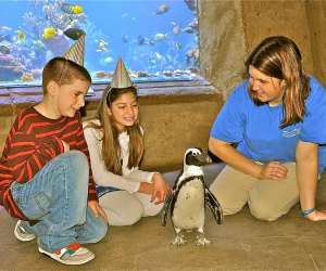 <i>Party guests can mingle with penguins at Long Island Aquarium.</i>