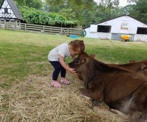 girl hugging a cow on a farm