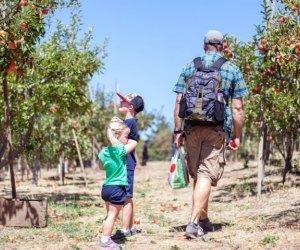 Apple Picking near Los Angeles: Los Rios Rancho