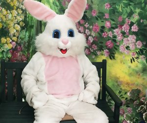 The Easter Bunny is the man of the hour at Hicks Nursery. Photo courtesy of the nursery