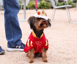 "Treat your favorite four-legged friend like royalty at ""Royals"" Doggie Day./Photo courtesy of Sarah Hobson, the Museum of Fine Arts, Houston."