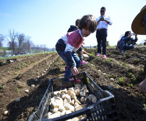 Planting time at Stone Barns Center for Food and Agriculture