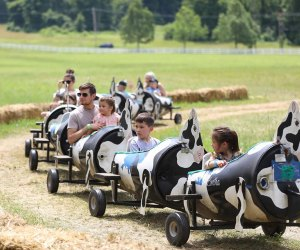 Ride the cow train at Ort Farms