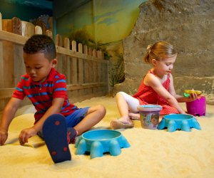 Hit the sand (indoors!) at the Outside In exhibit at the Academy of Natural Sciences. Photo by Jeff Fusco/courtesy the museum