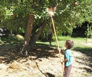 Apple Picking near Los Angeles Willowbrook Farm