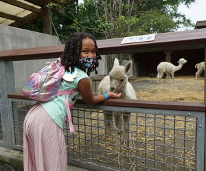 Seeing the animals at the Bronx Zoo is one of our favorite fall activities