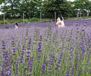 mom and daughter walking through field of lavender