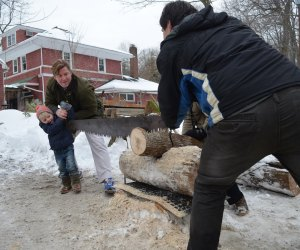 Can your family saw a log like a champ? Photo courtesy of the Rye Nature Center.