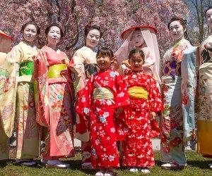 Sakura Matsuri, Brooklyn Botanic Garden's annual cherry blossom festival, celebrates Japanese culture with a rich program of events. Photo courtesy of BBG