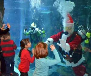 Dive into breakfast with Santa at the Downtown Aquarium./Photo courtesy of Downtown Aquarium.