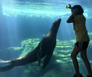 Aquarium of the Pacific - Chase the Sea Lion