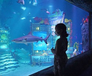 Girl gazes into tank with shark at Sea Life Aquarium