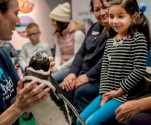 Celebrate our amazing natural world at the Shedd Aquarium's Family Festival. Photo courtesy of the aquarium