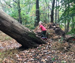 South Mountain Reservation offers plenty of open space to explore