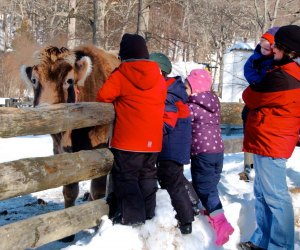 There are animals to visit even in the wintertime in Stamford. Photo courtesy of the Stamford Museum and Nature Center