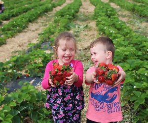 Two kids in strawberry fields at stony hill farms