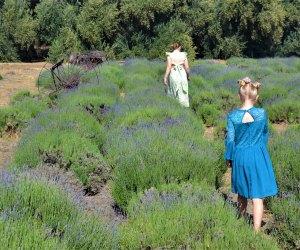 Walk through the lavender fields.