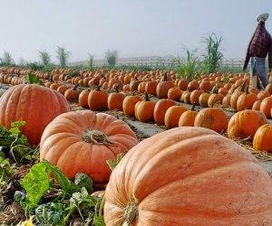 35+ Fall Activities near Los Angeles for Kids: Tanaka Farms