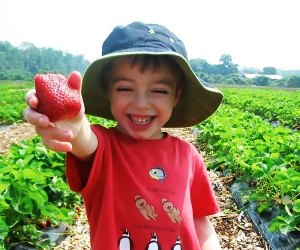 Juicy strawberries are sure to put a smile on your face