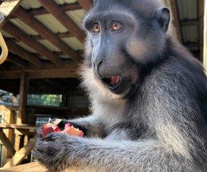 TGR Exotics Wildlife Park babboon