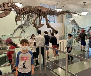 Boy in front of T. Rex at AMNH one of our favorite NYC tourist attractions