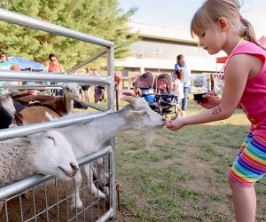The Tri-County Fair has it all—including adorable animals. Photo courtesy of the fair