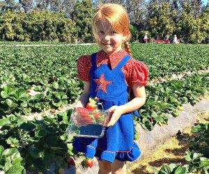 Pick Your Own Strawberries in LA: Underwood Farms