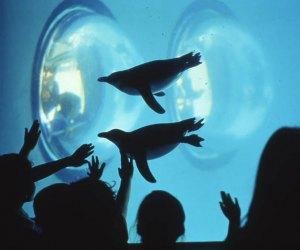 Photo Courtesy of Mystic Aquarium