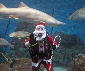 Photo Courtesy of Norwalk Maritime Aquarium