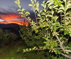 Apple Picking near Los Angeles: Volcan Valley Apple Farm