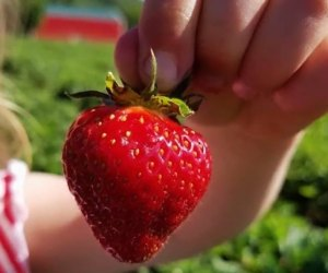 101 Fun Facts That Will Blow Your Kids' Minds: Only Strawberries have seeds outside