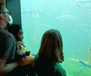 Things To Do in Seattle with Kids: Salmon Ladder
