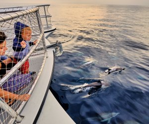 25 Things To Do with Kids in Dana Point: Watching dolphins Dana Point