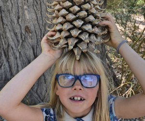 Huttopia Paradise Springs: Discover the Best New Glamping near Los Angeles: Giant Pinecones