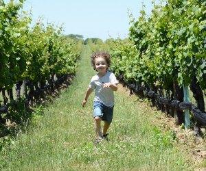Child runs through rows of grapes at Pindar Vineyards