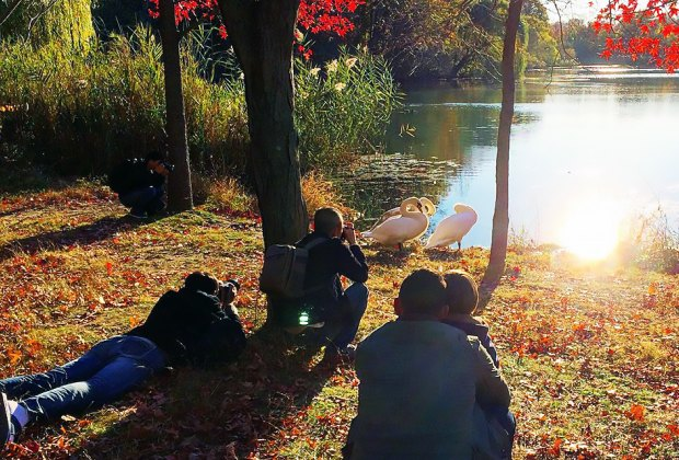 Swans at Alley Pond Park's Oakland Lake. Photo by david_nankervis via Instagram