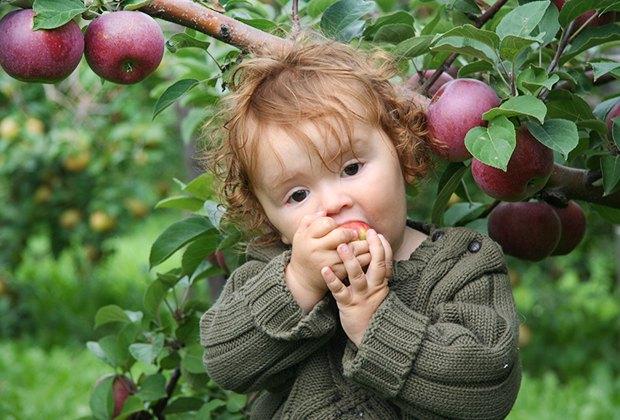 It's apple picking season! Photo by Tim & Selena Middleton/CC BY 2.0
