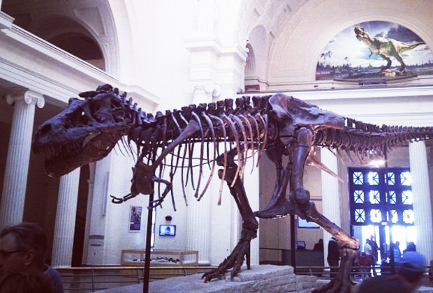 20 Things To Do with Chicago Babies Before They Turn One: Visit the Field Museum