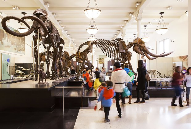 Use your IDNYC card at the American Museum of Natural History. Photo by Marley White for NYCGo