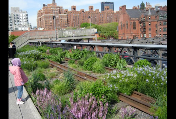 The High Line, where nature and city meet
