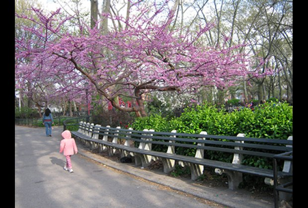 Monsignor McGolrick Park is lined with benches, beautiful trees and flowers