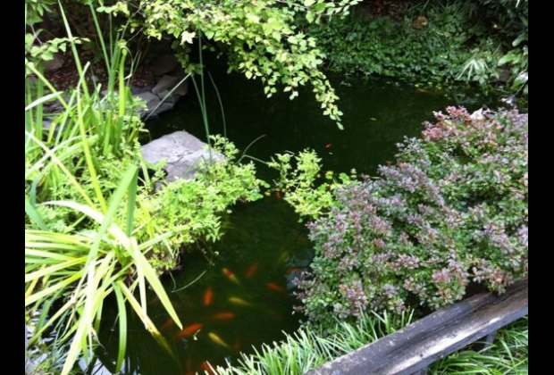 Try to spot the koi in 6BC Botanical Garden's pond