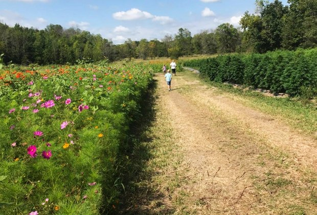 kids run through a field of flowers Gorgeous Sunflower Fields for Pick-Your-Own Flowers near Chicago