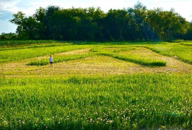 flower field corn maze Gorgeous Sunflower Fields for Pick-Your-Own Flowers near Chicago