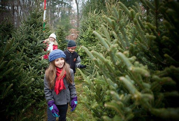 Cut Your Own Christmas Tree Farms Near NYC