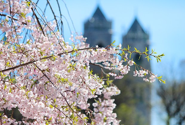 The Essex County Cherry Blossom Festival is full of springtime family fun. Video by Andre Sala.