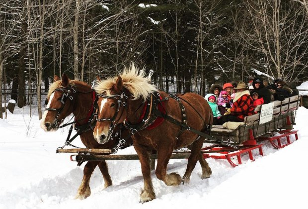 sleigh riding horses pulling sleigh in snow Things to Do in Lake Placid on a Winter Vacation Status message
